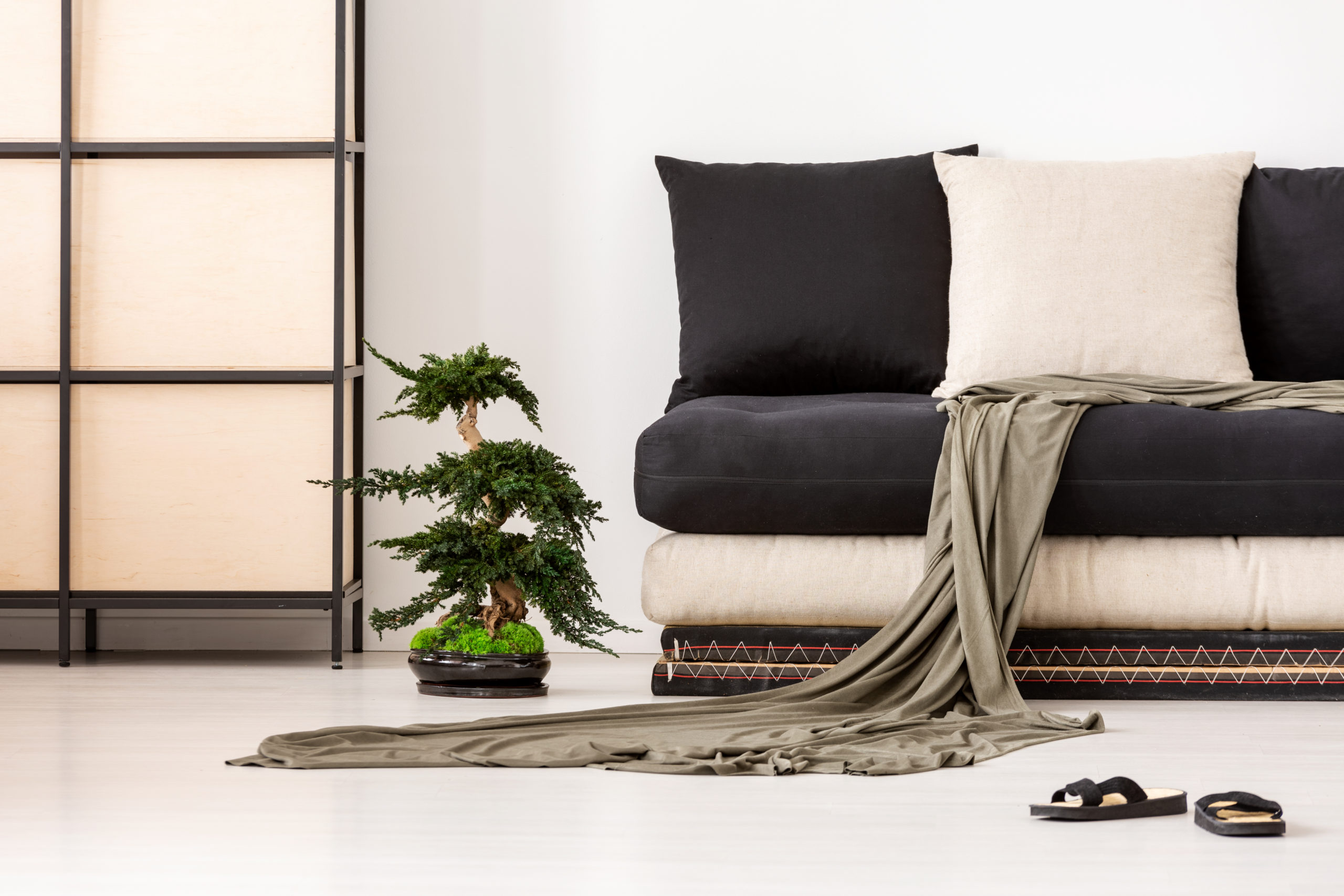 Blanket and pillows on black couch in asian living room interior with shoes and bonsai. Real photo